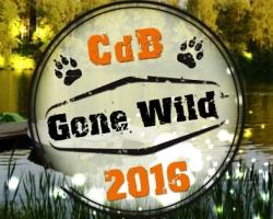 Salsa aasta tähtsündmus: CdB Gone Wild Salsalaager!